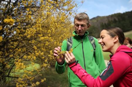 Geführte Dirndl-Blüten-Wanderung im Pielachtal_(c)weinfranz